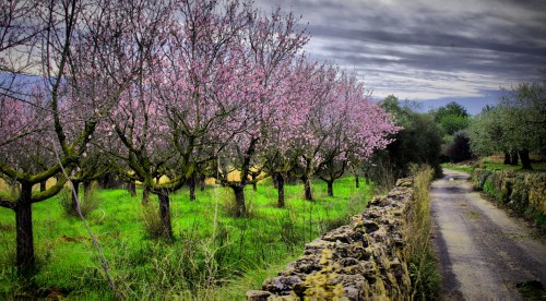 Almond Trees Jigsaw Puzzle