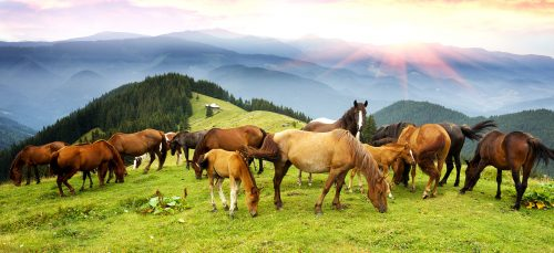 Alpine Horses Jigsaw Puzzle