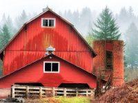Amboy Barn
