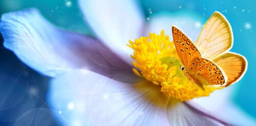 Anemone Bloom Jigsaw Puzzle