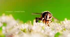 Another Busy Bee