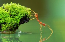 Ant and Water