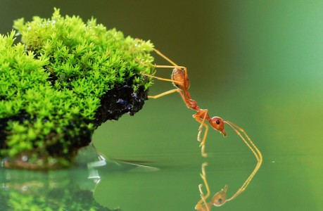Ant and Water Jigsaw Puzzle