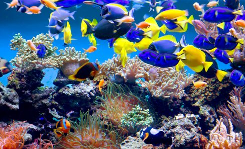 Aquarium Fish Jigsaw Puzzle