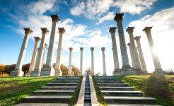 Arboretum Columns