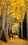 Aspen Stroll