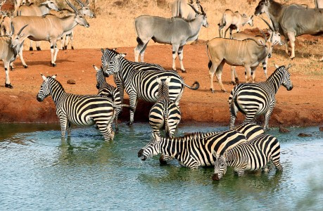 At the Waterhole Jigsaw Puzzle