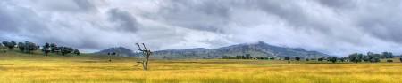 Australia Grassland