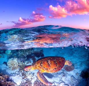 Australia Sea Turtle Jigsaw Puzzle