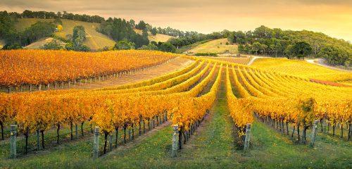 Australian Vineyard Jigsaw Puzzle