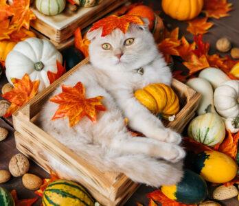 Autumn Cat Jigsaw Puzzle
