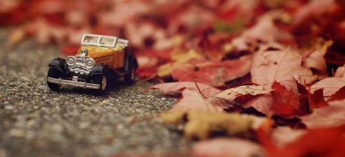 Autumn Drive Jigsaw Puzzle