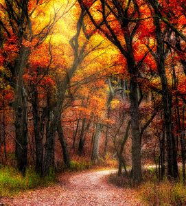 Autumn Light Jigsaw Puzzle