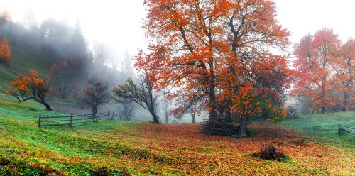 Autumn Mist Jigsaw Puzzle