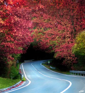 Autumn Road Jigsaw Puzzle