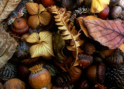 Autumn Things Jigsaw Puzzle