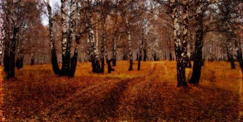 Autumn Trail Jigsaw Puzzle