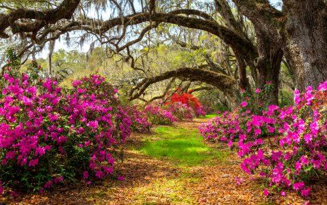 Azaleas and Oaks Jigsaw Puzzle