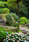 Azores Steps