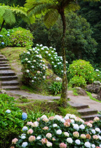 Azores Steps Jigsaw Puzzle