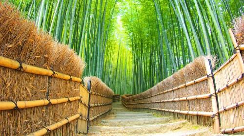 Bamboo Grove Jigsaw Puzzle