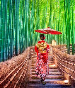Bamboo Path Jigsaw Puzzle