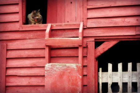 Barn Cat Jigsaw Puzzle