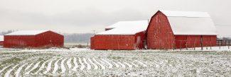 Barns in Snow
