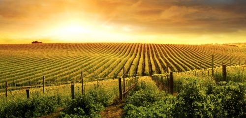 Barossa Vineyard Jigsaw Puzzle