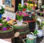 Barrels and Flowers