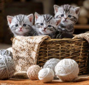 Basket Kittens Jigsaw Puzzle
