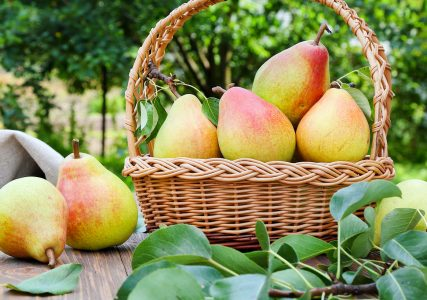 Basket of Pears Jigsaw Puzzle