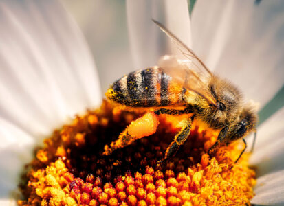 Bee Pollen Jigsaw Puzzle