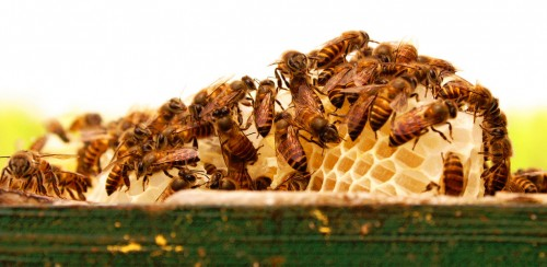 Bees and Honeycomb Jigsaw Puzzle