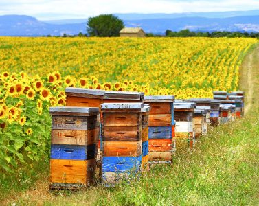 Bees and Sunflowers Jigsaw Puzzle