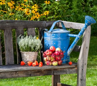 Bench and Apples Jigsaw Puzzle