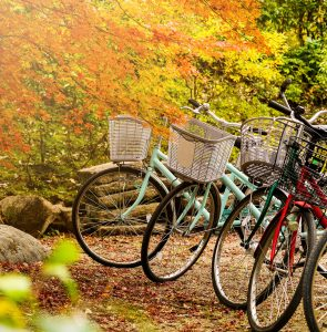 Bikes in a Park Jigsaw Puzzle