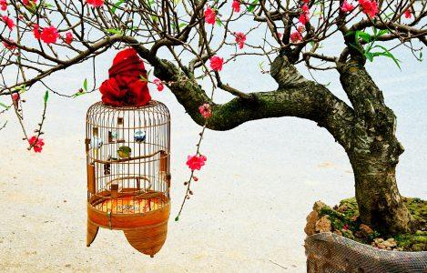Birdcage Jigsaw Puzzle