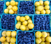 Blueberries and Plums