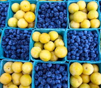 Blueberries and Plums Jigsaw Puzzle