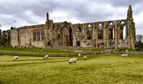 Bolton Abbey Sheep Jigsaw Puzzle