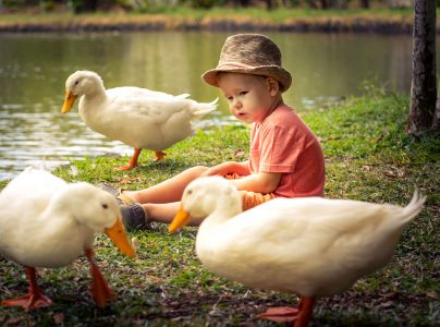 Boy and Geese Jigsaw Puzzle