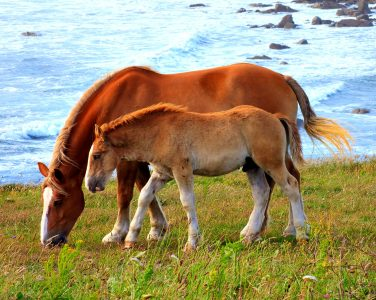 Breton Horses Jigsaw Puzzle