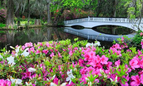 Bridge and Azaleas Jigsaw Puzzle