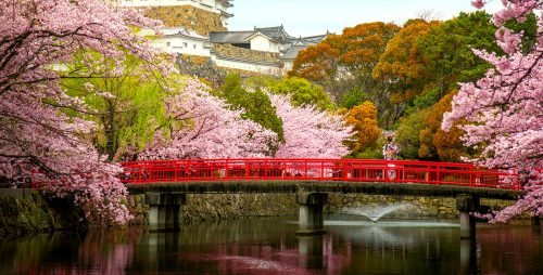 Bridge and Cherry Blossoms Jigsaw Puzzle