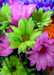 Bright Flowers Jigsaw Puzzle
