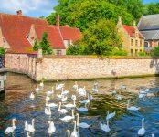 Bruges Geese