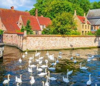 Bruges Geese Jigsaw Puzzle