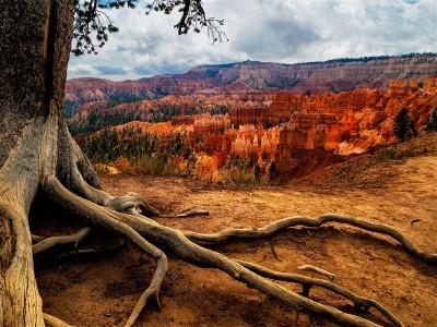 Bryce Canyon Jigsaw Puzzle