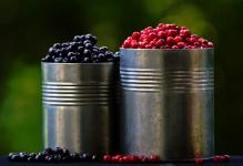 Buckets of Berries